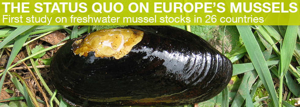 The Status Quo on Europe's Mussels: First study on freshwater mussel stocks in 26 countries (Photo: TUM/ Geist)