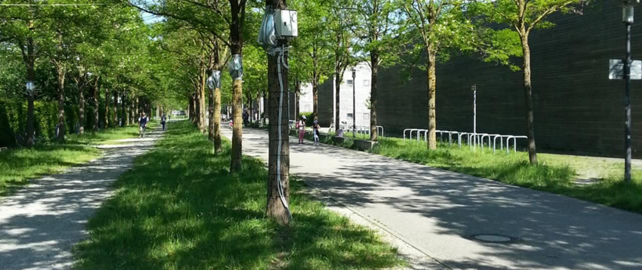 One location was the Lehrer-Wirth-Strasse in Munich, where measuring instruments were attached to Robinia below the foliage. (Picture: F. Rahman/ TUM)