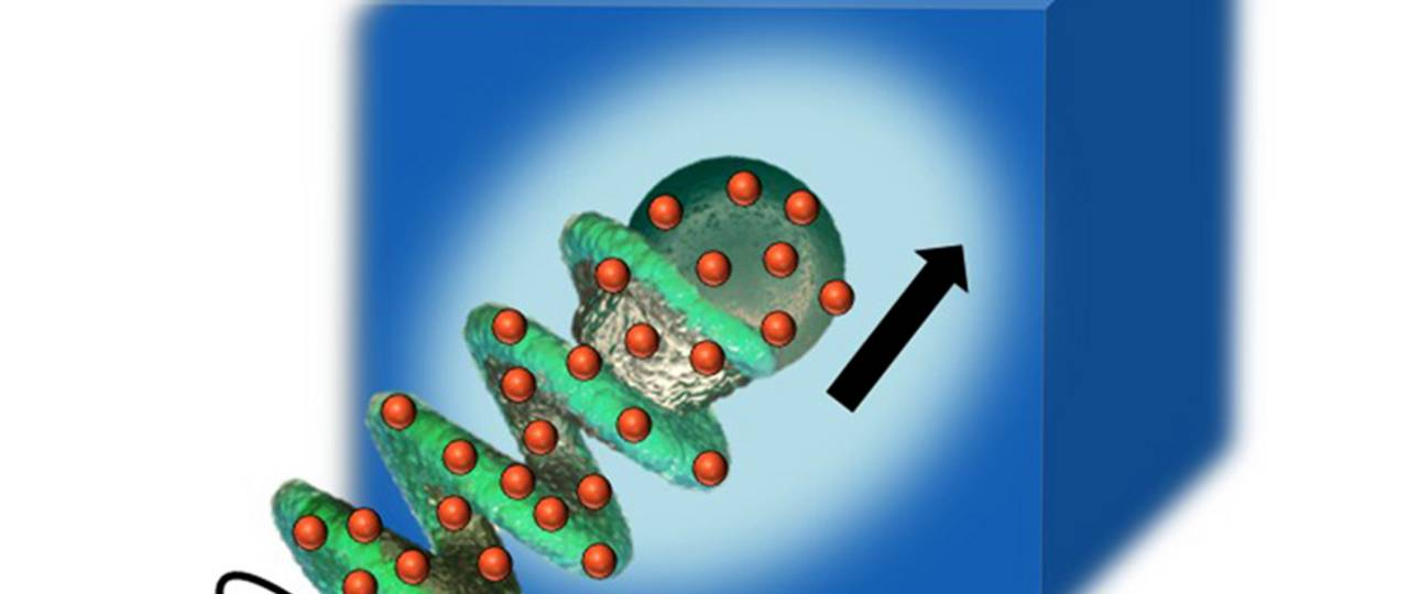 The enzyme-coated (marked in red) micropropeller can liquefy mucus. (Picture: Debora Walker / MPI for Intelligent Systems Stuttgart)
