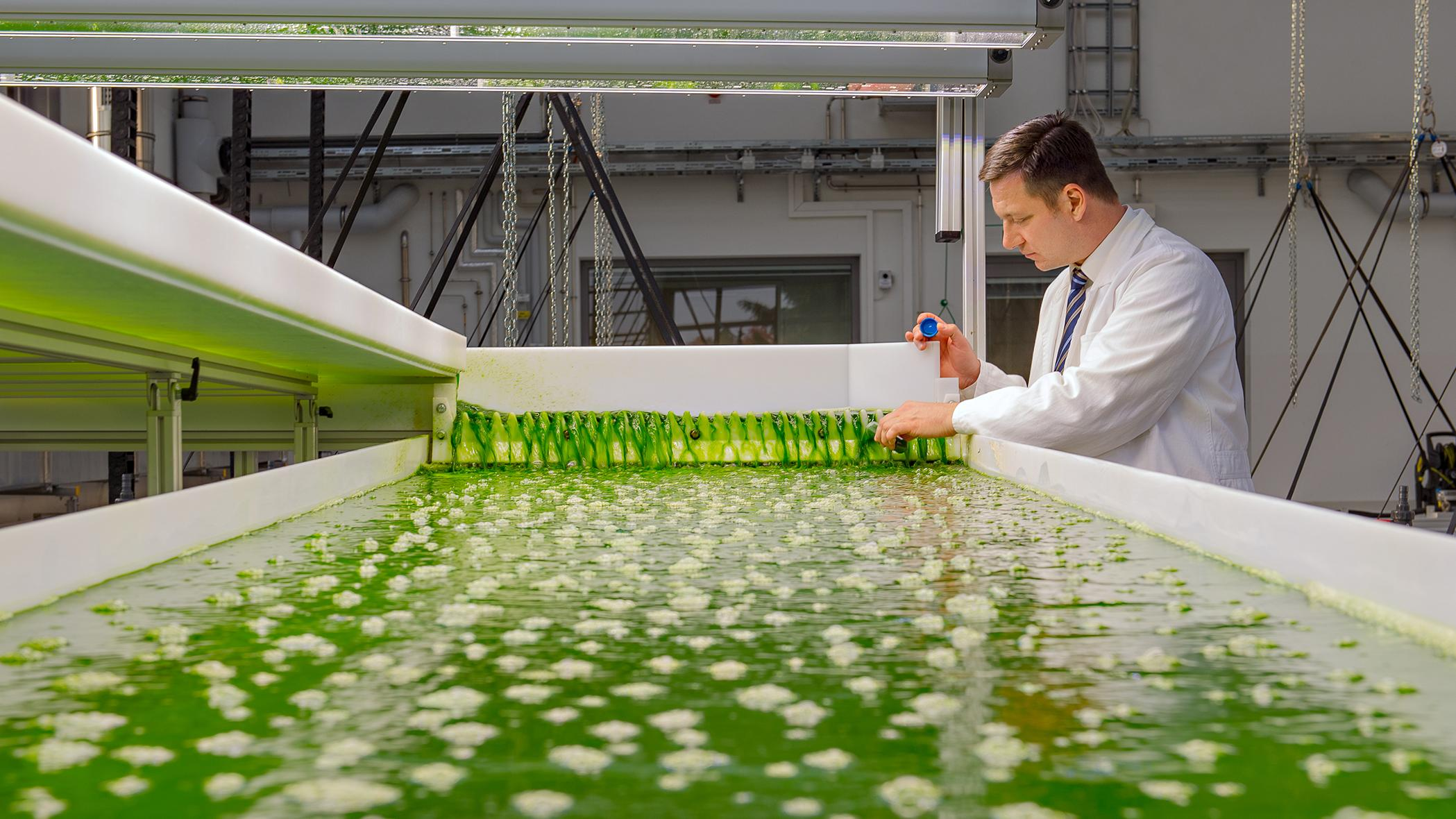 Prof. Thomas Brück stands at a pool with algae