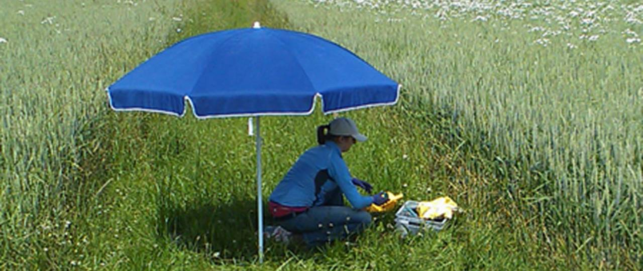 Earthworm sampling on a grass verge between fields in Southern Bavaria.
