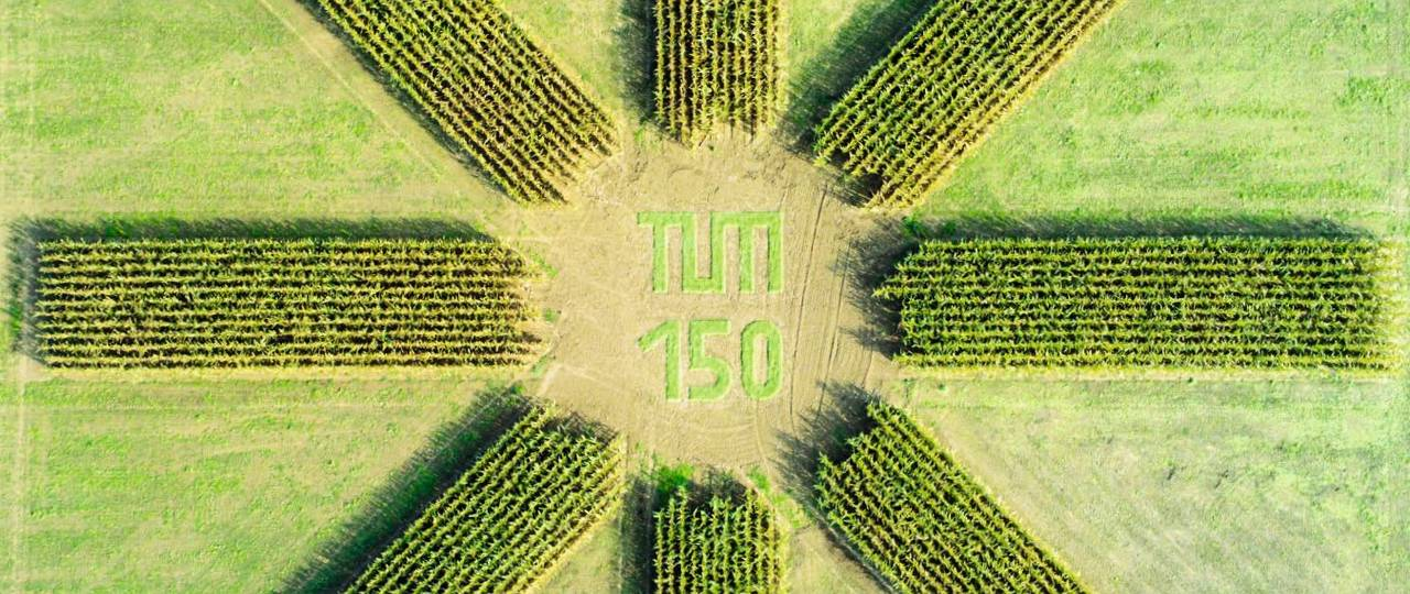 This aerial photograph of a corn plantation of the Chair of Plant Nutrition was taken on the occasion of our 150th anniversary and is now featured on our university's Christmas cards. (Picture: Prof. Urs Schmidhalter)