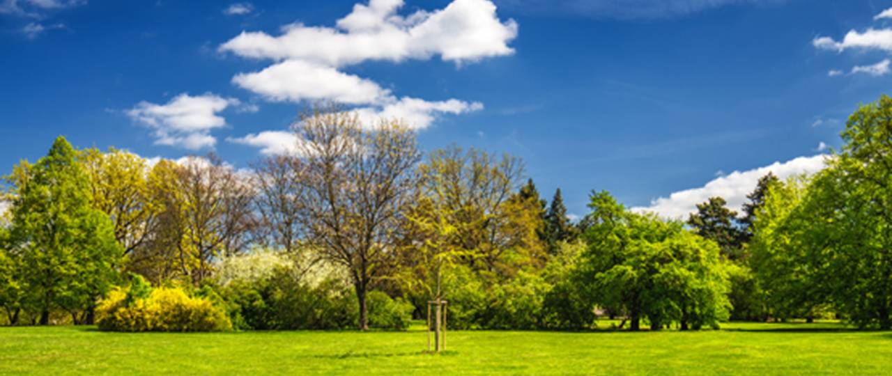 Mixed forests mitigate climate change because they store carbon dioxide longer and better. (Photo: iStock/DaLiu)