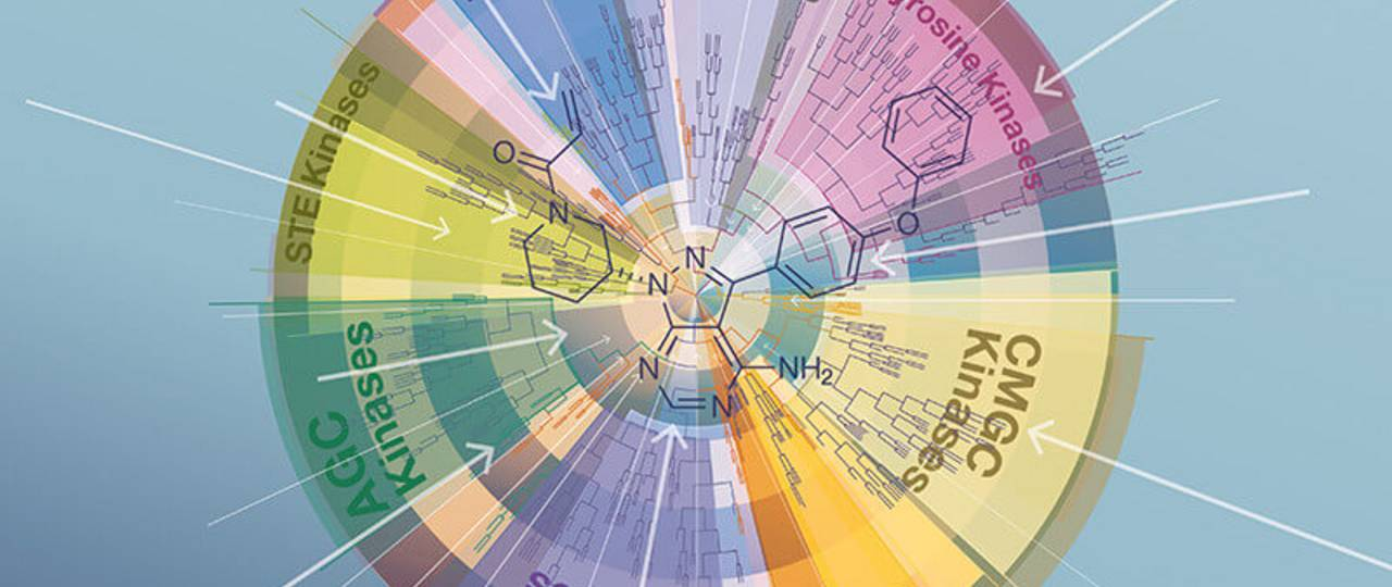 In more than 6000 hours of mass spectrometry, the international research team analyzed the interaction of 243 clinically proven inhibitors with hundreds of kinases. (Picture: ediundsepp/ Kuester)