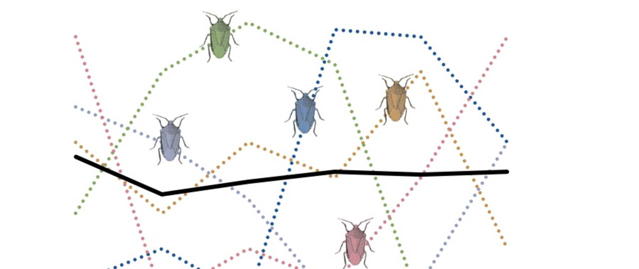 The abundance of species is subject to natural variations (dotted lines). The mean variation of the entire community fluctuates much more if the individual species are synchronous. In contrast, if the abundance of species varies asynchronously, the abundance of the community is very stable. (Abb.: TUM/ Gossner)