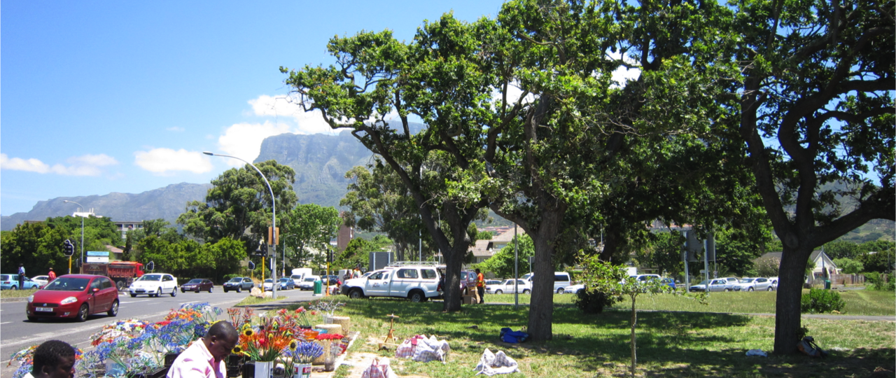 For the study, samples of heartwood from trees in major cities such as here in Cape Town were taken and analyzed. (Photo: TUM)