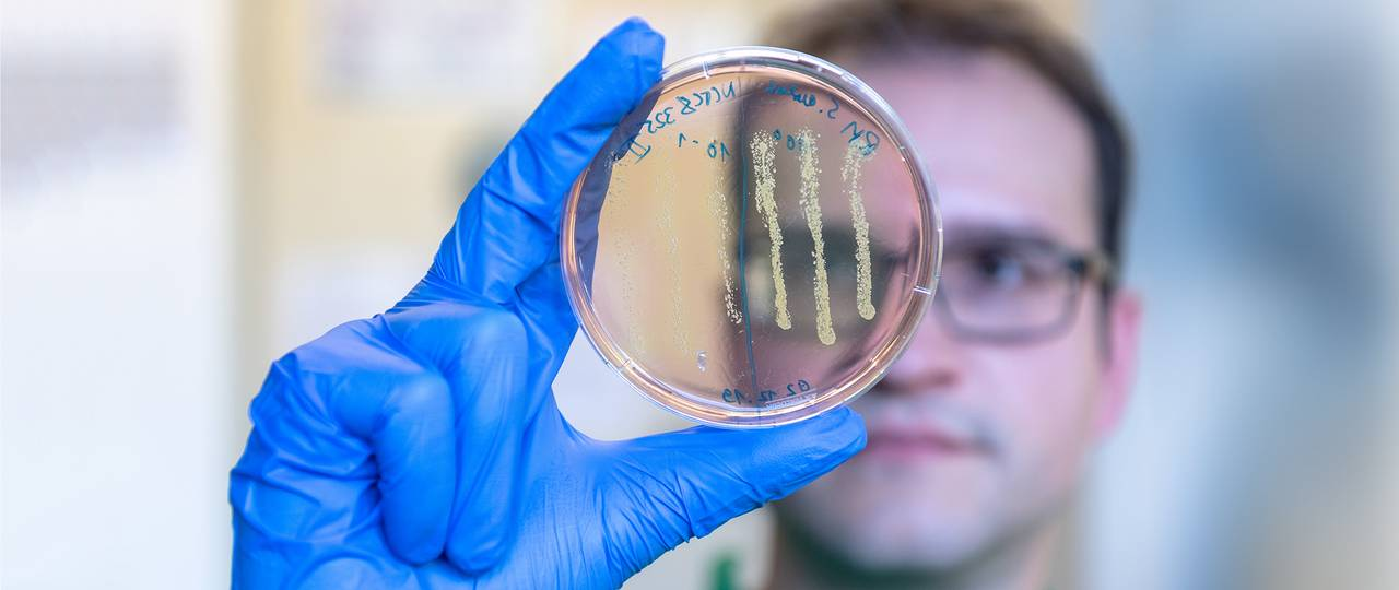 PhD-student Robert Macsics examining an agar plate on which colonies of the Staphylococcus aureus bacteria have grown. The color change of the plate from red to yellow in the area of the bacterial colonies indicates that they are bacteria of the species S. aureus.