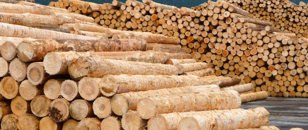 In cascade use, wood is used much more efficiently with a quota of 46 percent than in simple use. (Photo: R. Rosin / TUM)