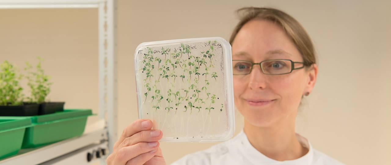 Woman in laboratory with seedlings in transparent container.