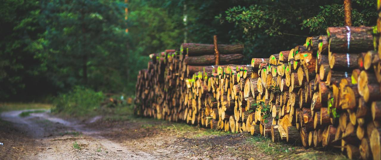 Logs stacked on top of each other along the roadside.
