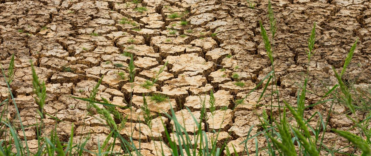 If the input of organic matter stagnates, soil will lose some of its humus in the long term. (Image: Fotolia)
