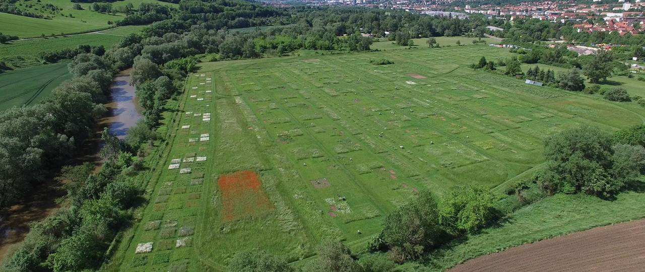 """Aerial photo of the experimental field """"Jena Experiment"""" with 80 plots."""