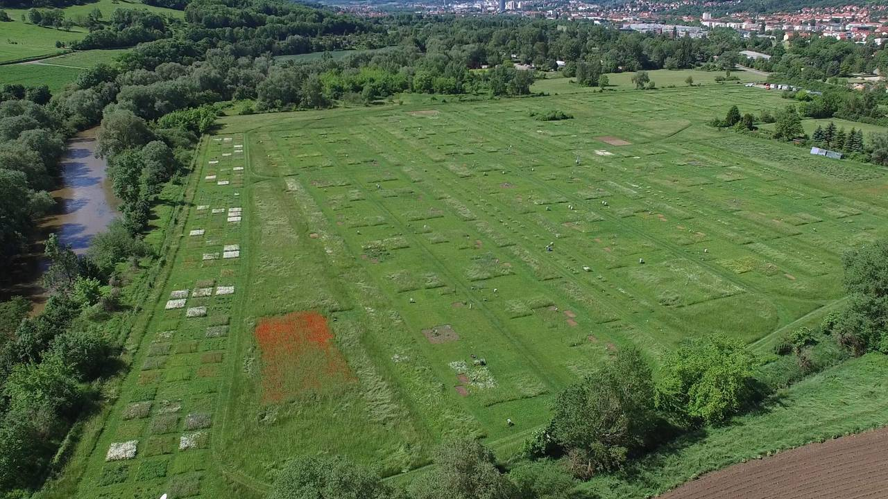 "Aerial photo of the experimental field ""Jena Experiment"" with 80 plots."
