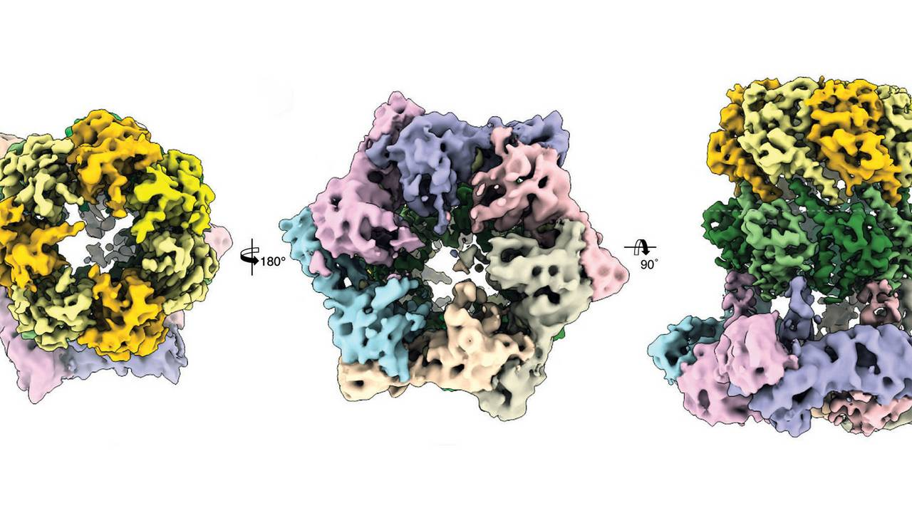 Three cryo-electron microscopic views of the protein complex ClpX-ClpP.