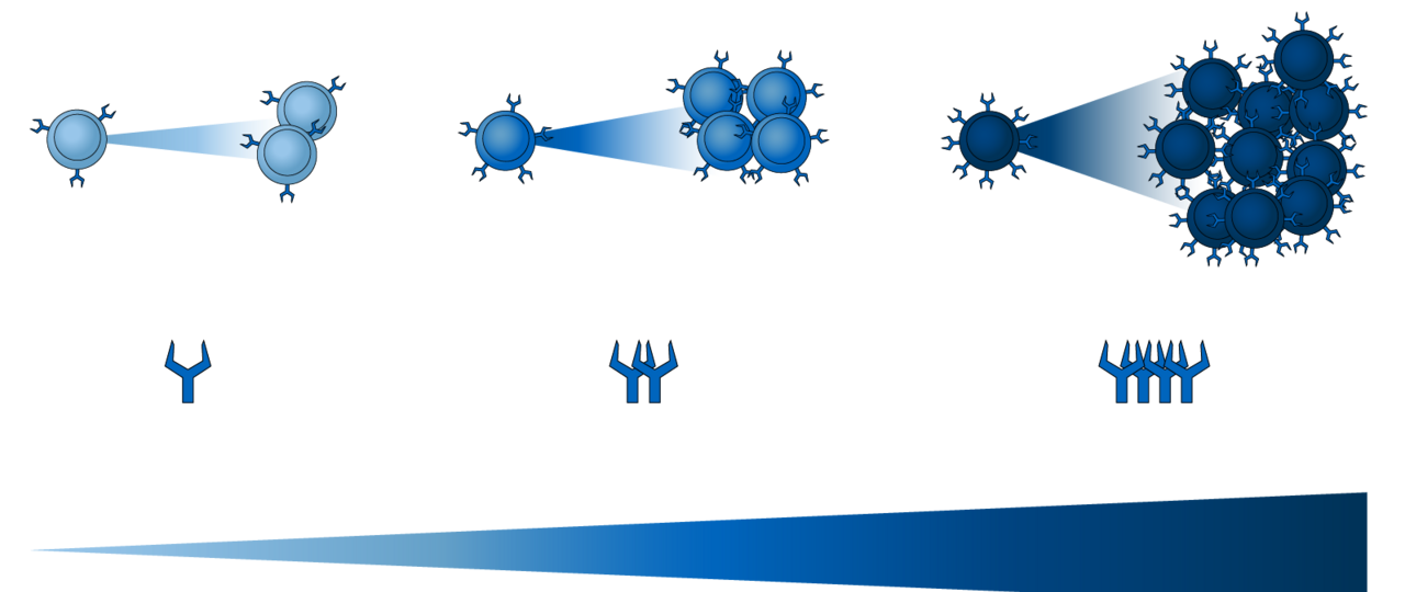 The graphic shows the distribution of the Ly49H-receptor on the surface of different natural killer cells (NK). Depending on the amount of receptors, single cells expand stronger or weaker.