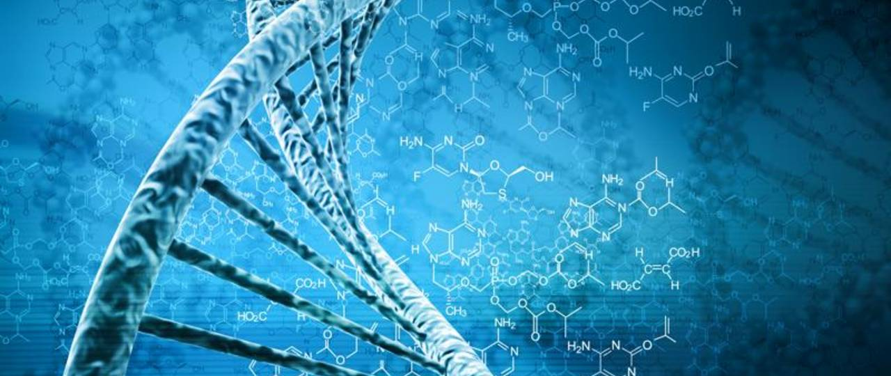 Variations in the DNA have big effects on cell functions.