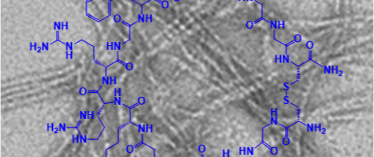 A new class of designed macrocyclic peptides has been developed which are highly potent inhibitors of amyloid plaque formation. (Picture: Kapurniotu/ TUM)