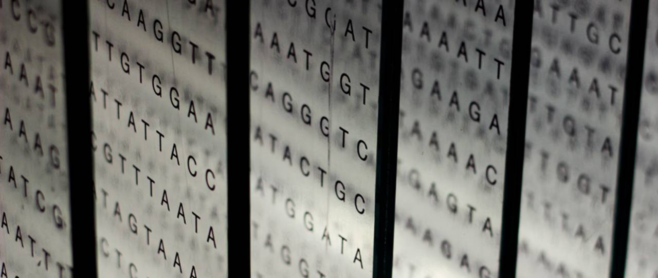 A visualization of the base pairs in the human genome consisting of several rows of the letters G, A, T, and C.