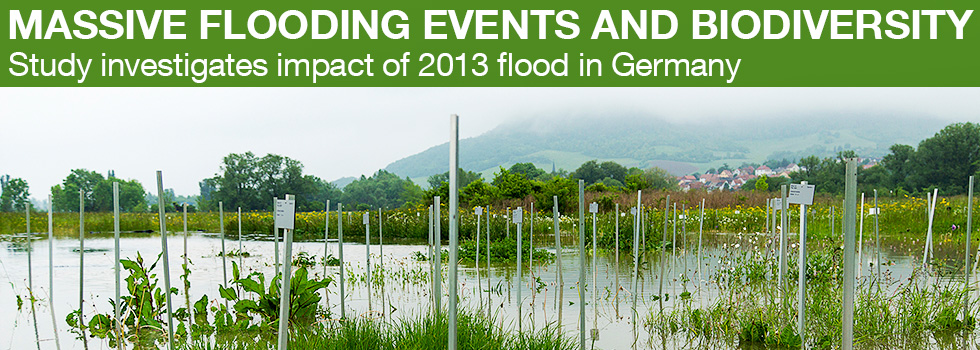 Massive flooding and biodiversity - study investigates impact of 2013 flood in Germany (photo: Victor Malakhov / iDiv)