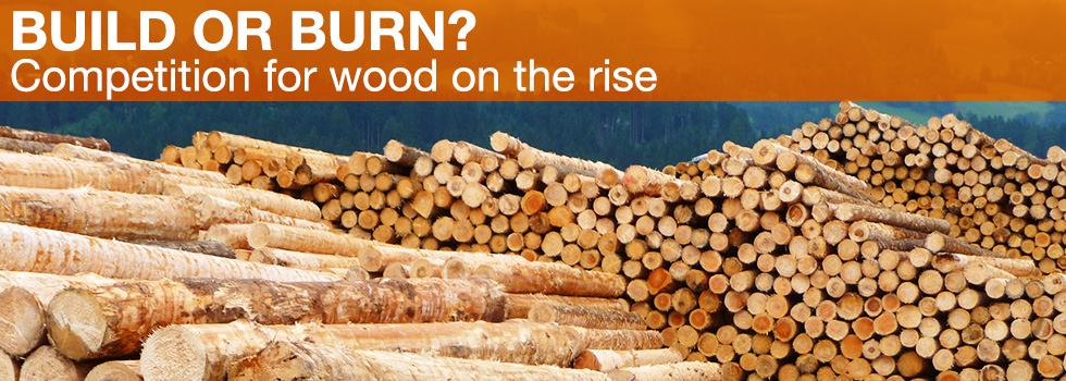 Build or burn? Competition for wood on the rise (Photo: R. Rosin / TUM)