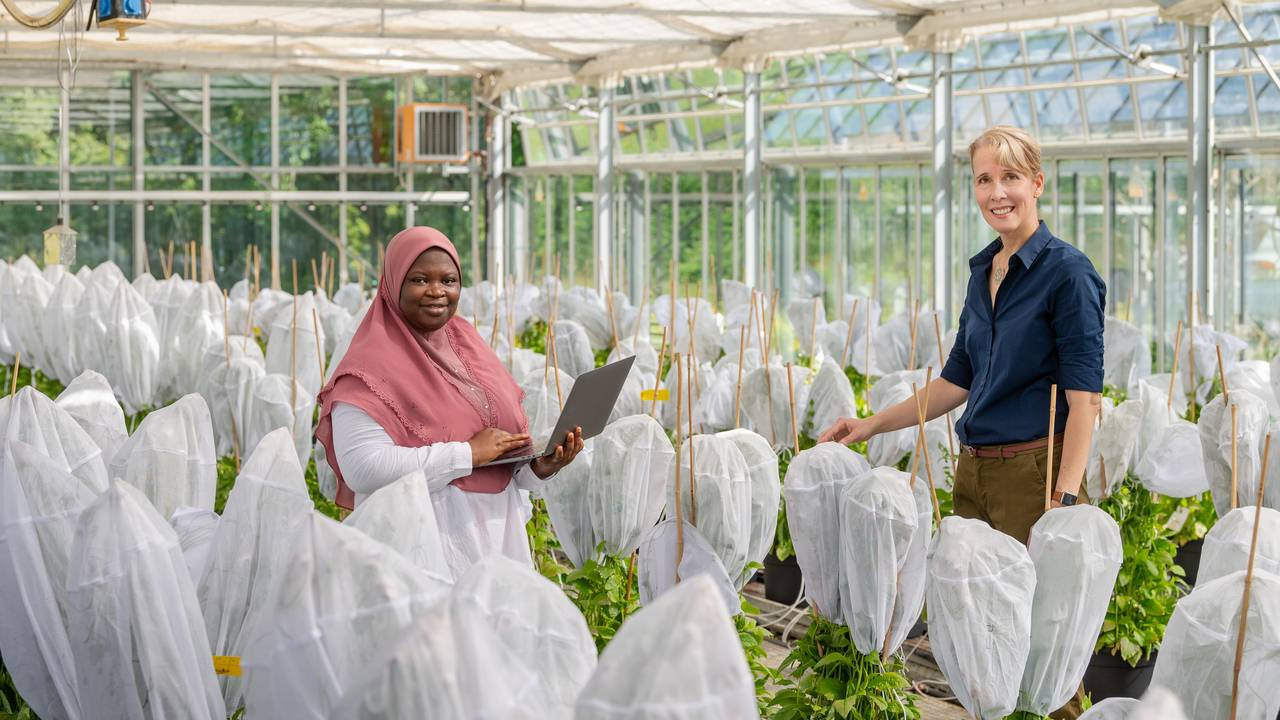 Prof. Brigitte Poppenberger and her doctoral student, Adebimpe Adedeji-Badmus, surrounded by Ebolo plants in a greenhouse of the TUM School of Life Sciences.