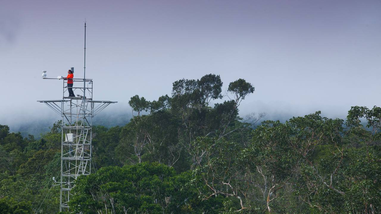 Measuring tower of the AmazonFACE project in the Brazilian rainforest.