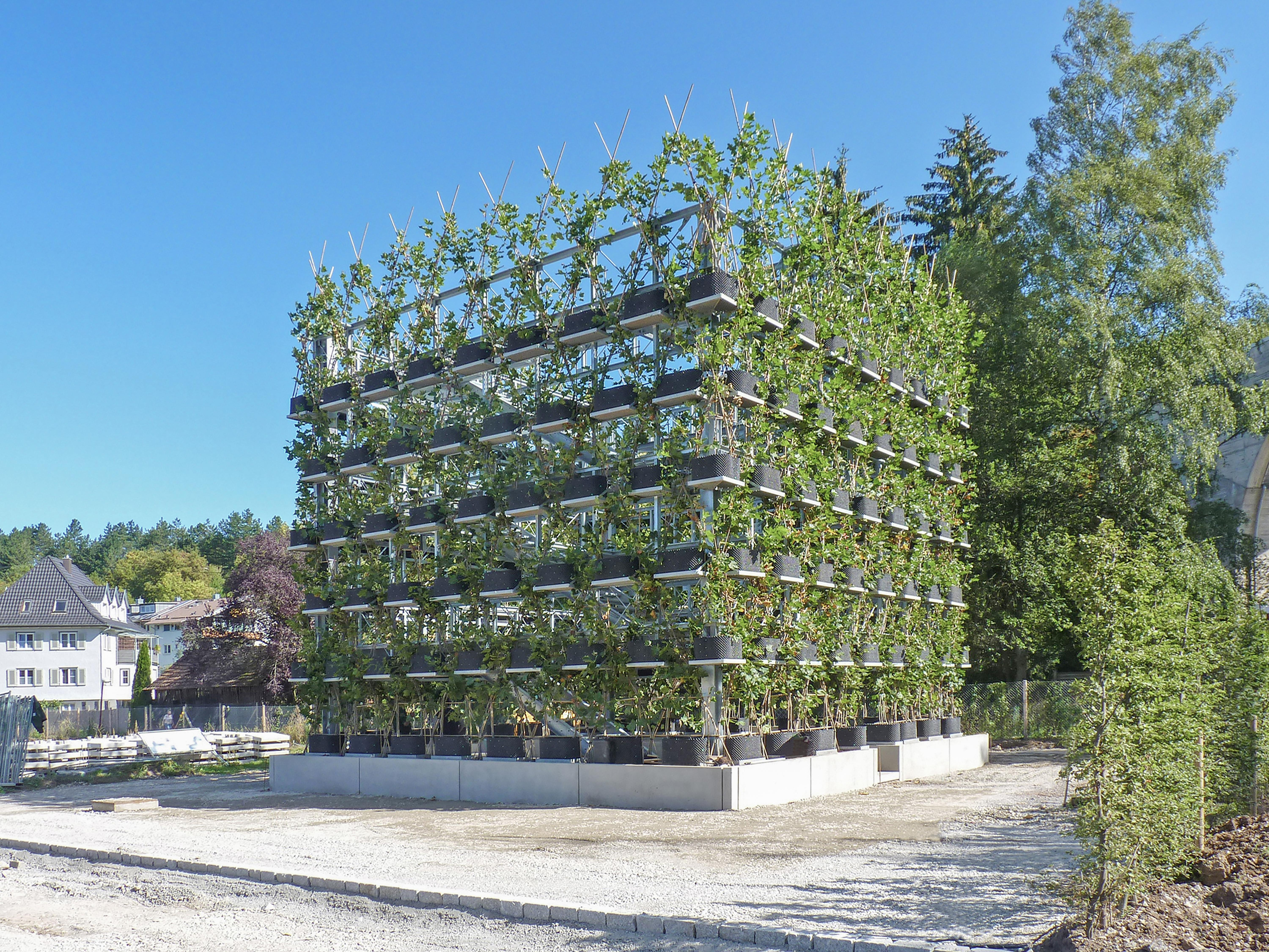 A Baubotanik building has already been implemented in Nagold in southwest Germany: The building appears less as a building than as a tree due to the plane tree façade. It is perceived as a break in the urban space.