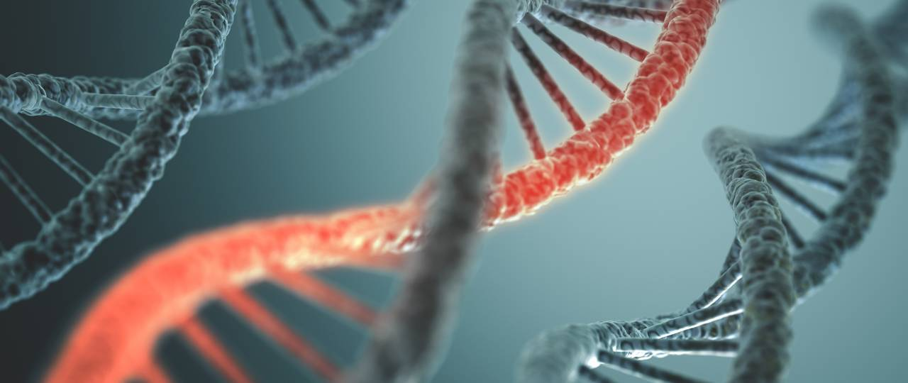 Researchers used the Crispr-Cas9 gene scissors to cut a defective part from the DNA.