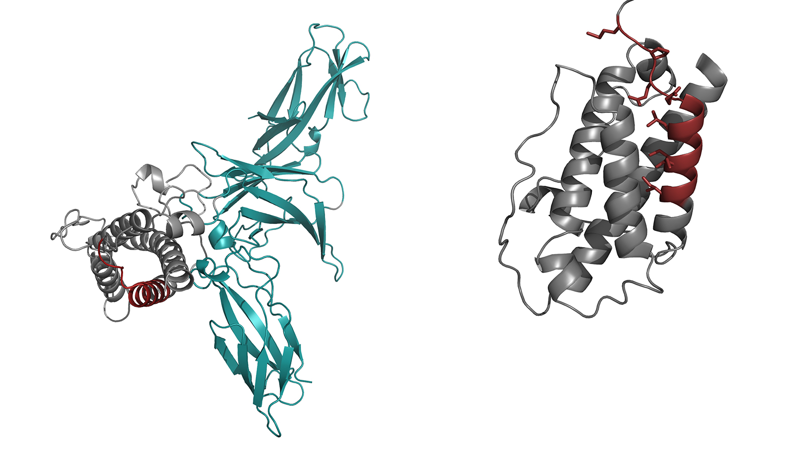 Complete structure of interleukin 23 and the structure of the modified IL23-alpha component.