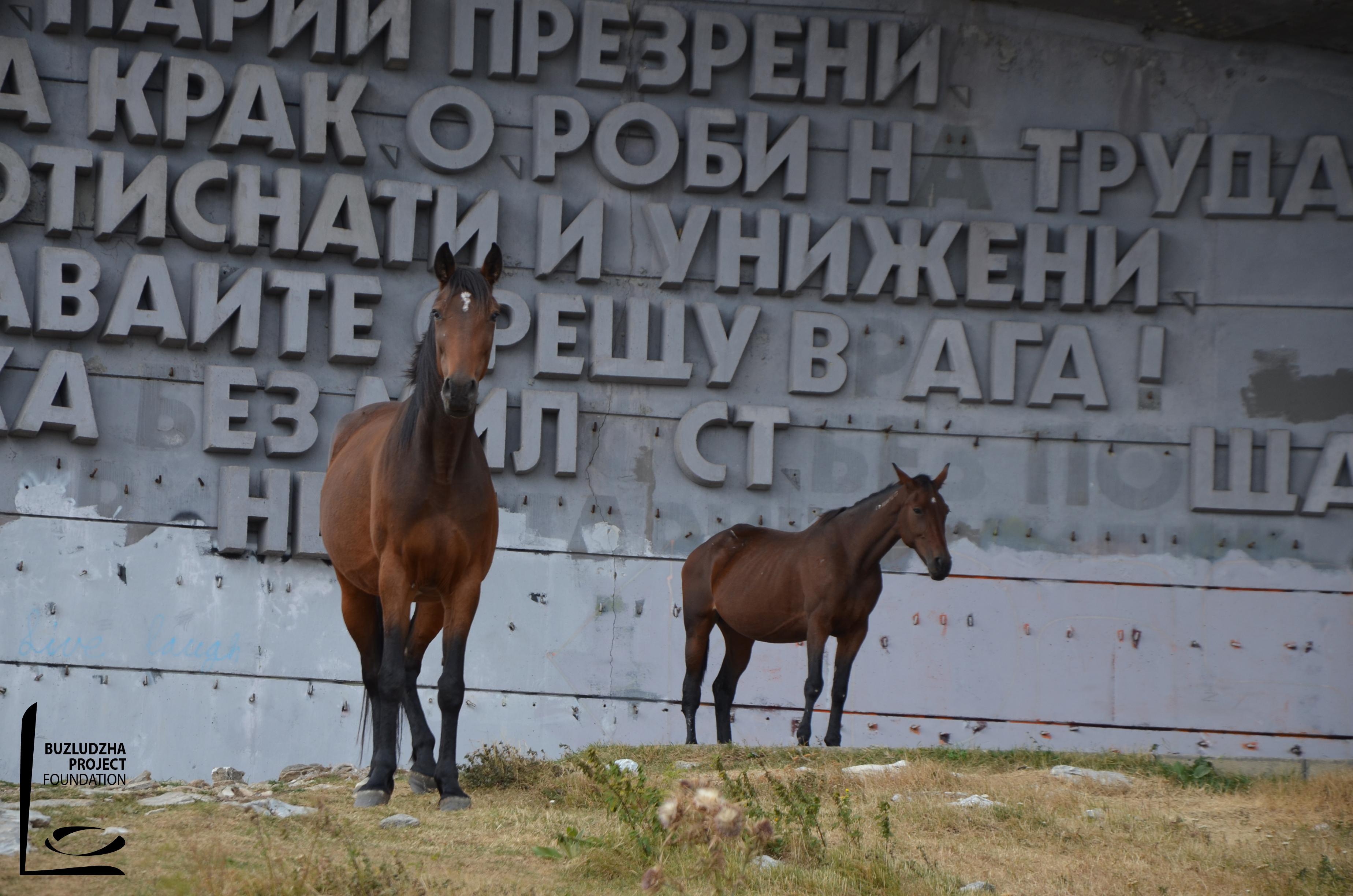 Wild horses in front of the Buzludzha monument.