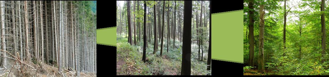 Struktur eines Waldes von der Monokultur eines Fichtenwalds hin zu einem Mischwald.
