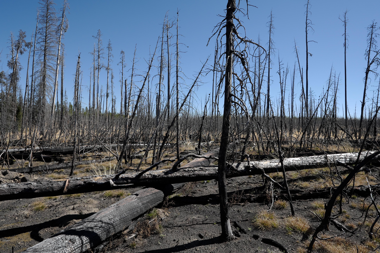 Wald nach Waldbrand